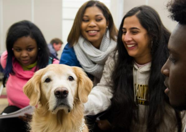 Dogs On Call therapy dog Smooch, a golden retriever, faces the camera as three V C U students pet Smooch