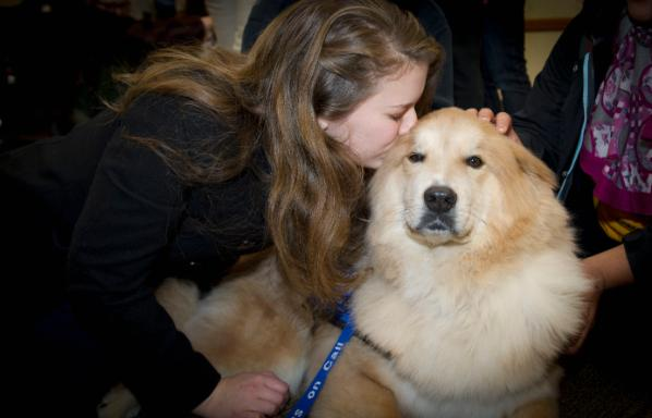 Dogs On Call therapy dog Tucker, a golden retriever and chow mix, receives a kiss on the forehead from a v c u student