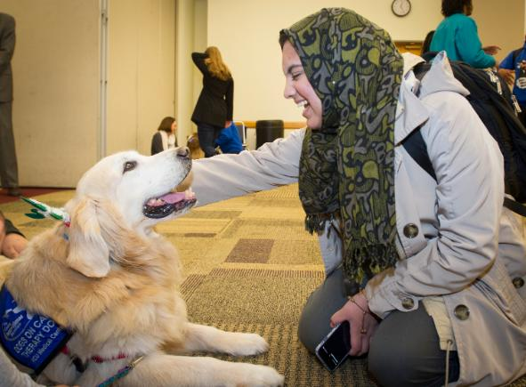 Dogs On Call therapy dog Scrappy, a golden retriever, looks up at a student smiling who is petting Scrappy