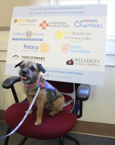 Dogs On Call therapy dog Gabbi, a border terrier with a brown and gray coat who is sticking her tongue out slightly, sits in front of The Center for Human-Animal Interaction's Sponsor Board. The full text and sponsors are mentioned in the text of the post.