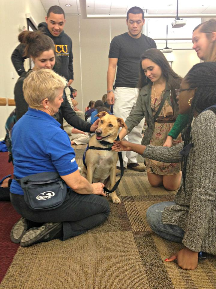 A Dogs On Call therapy dog is surrounded by 6 students and the dog's handler. the dog is watching their handler intently and the students are smiling
